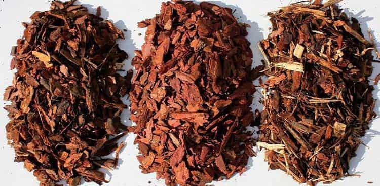 Настой на коре лиственницы при лечении диареи