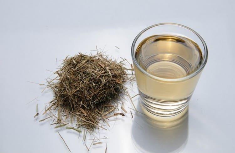 Настойку этой травы принимают для облегчения симптомов туберкулеза.