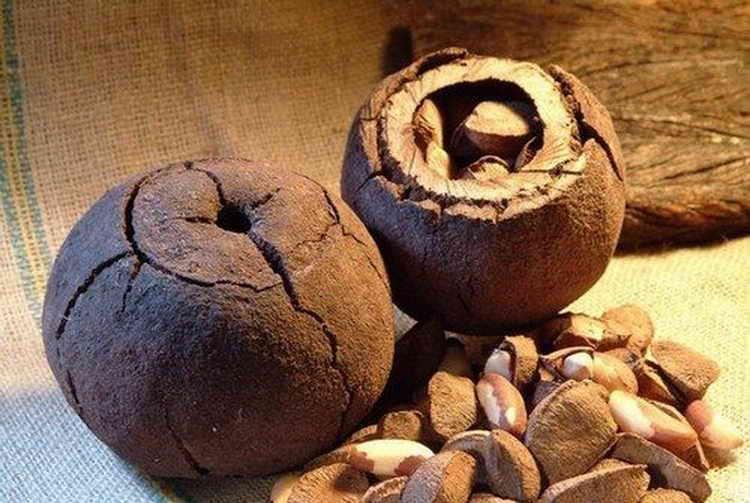 бразильский орех полезные свойства и противопоказания