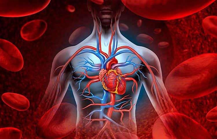Полезные свойства ягод ежевики позволяют использовать ее для укрепление иммунитета и в частности сердца.