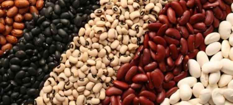 Фасоль полезные свойства растения