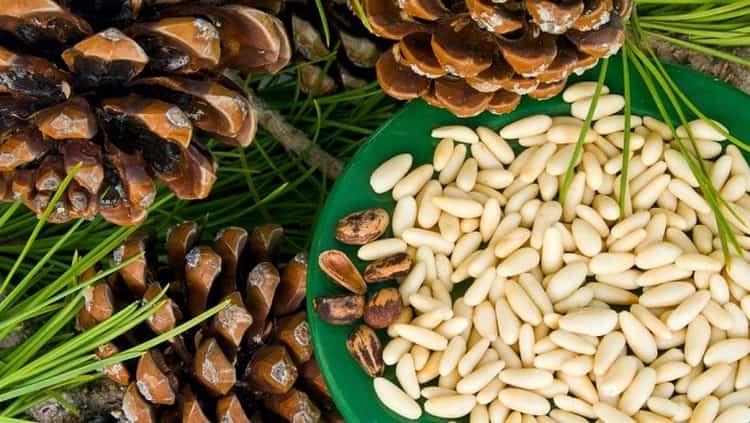 Польза кедровых орехов неоспорима.