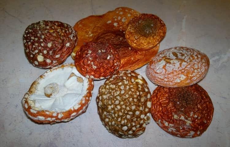 теперь вы знаете все о полезных свойствах этого красивого, но такого ядовитого гриба.