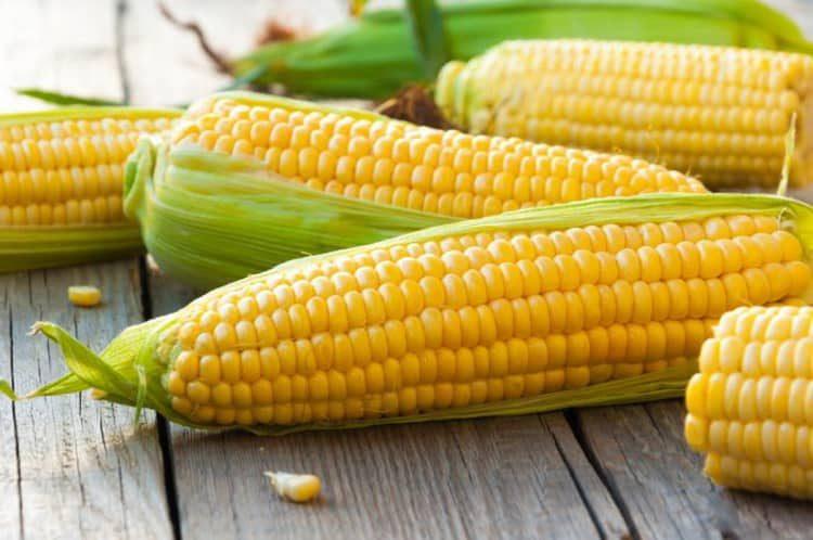 консервированная кукуруза польза и вред для здоровья