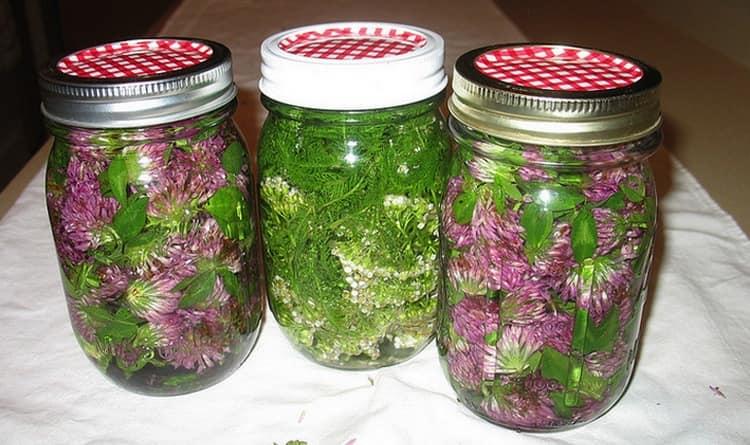 В домашних условиях для лечения можно использовать настойку цветков клевера.