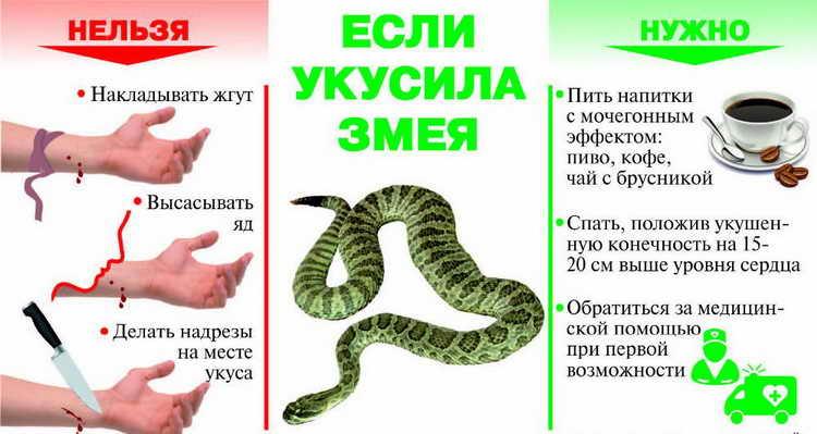 первая помощь при укусах змей что нельзя