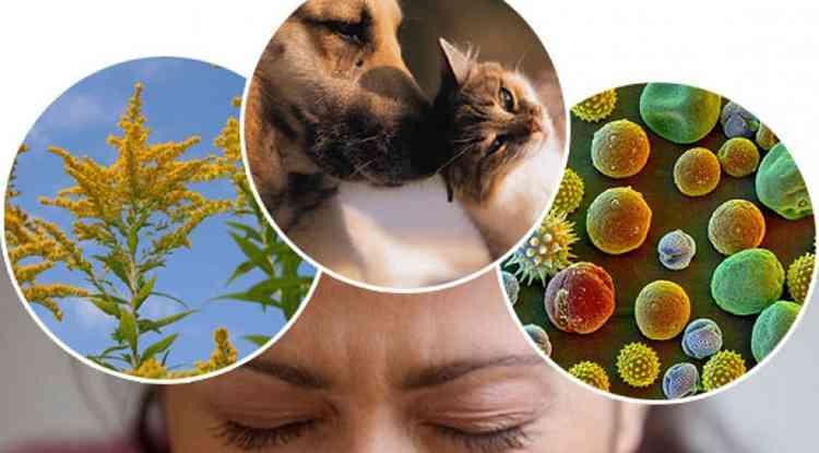 Ряска поможет справиться с некоторыми аллергенами