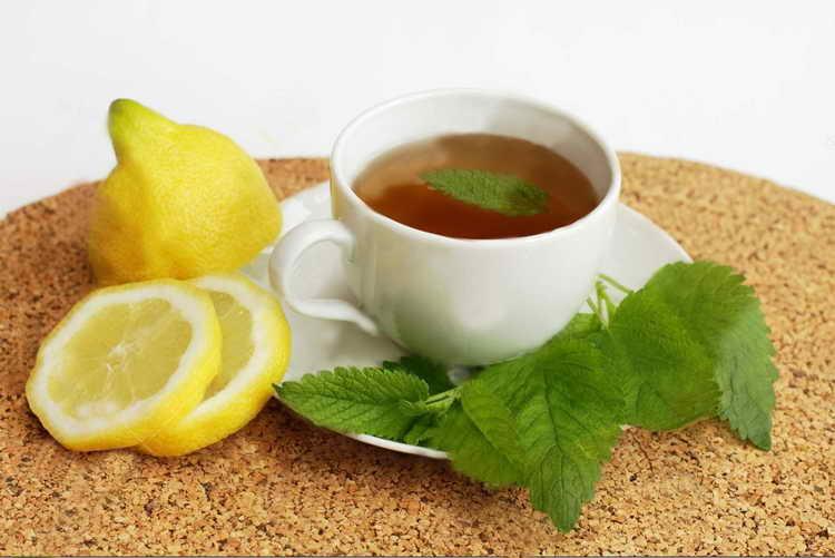 Чай из мелиссы при атопическом дерматите