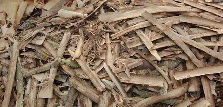 Как собрать и заготовить сырье осины