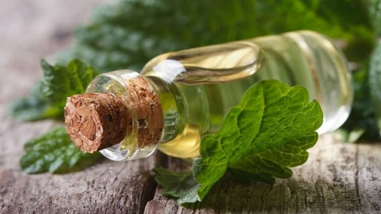 В народной медицине используются отвары и настои из этого растения.