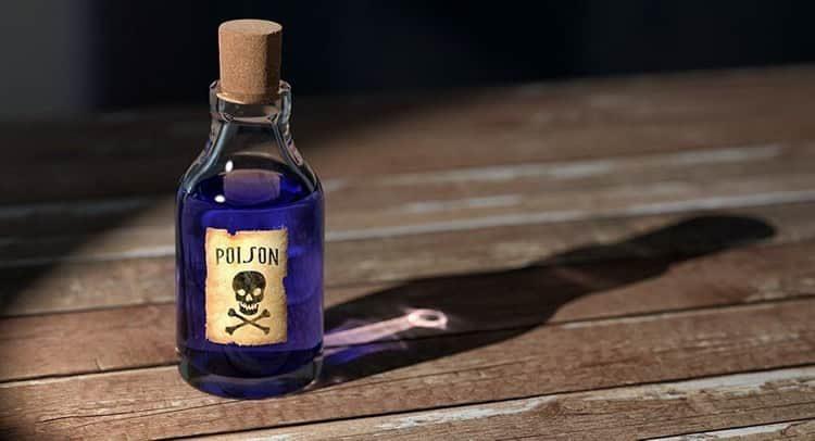 Чилибуха: лечебные свойства и противопоказания, польза и вред