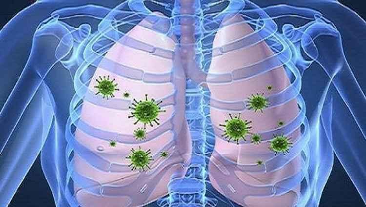 Рудбекия поможет при воспалении дыхательных путей