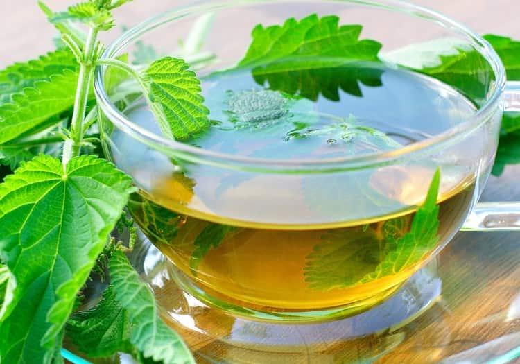 Пользу приносит и чай из крапивы, но важно знать, как его правильно приготовить, чтобы не нанести организму вред.