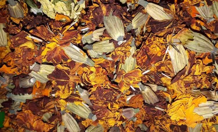высушенные цветки используются для приготовления целебных отваров.